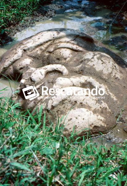 Cabeza Olmeca - Rescatando