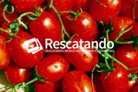 Producción Tomatera - Rescatando
