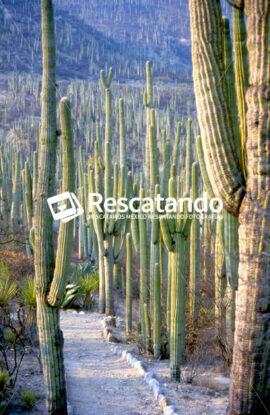 Cactus - Rescatando