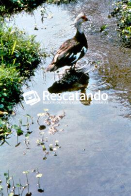 Fauna Huasteca - Rescatando
