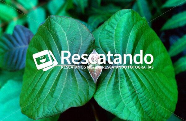 Flora del Usumacinta - Rescatando