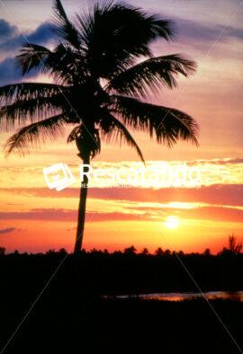 Tamiahua - Rescatando