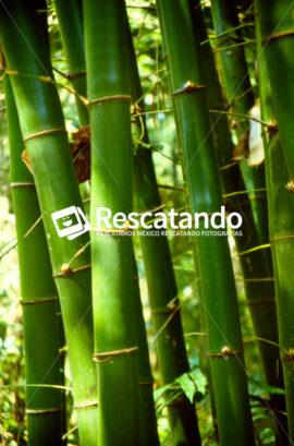 Vegetación Veracruzana - Rescatando