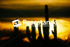 Cactus al atardecer - Rescatando
