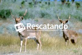 """Rancho """"El Tinieblo"""" - Rescatando"""