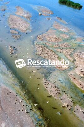Sinaloa - Rescatando
